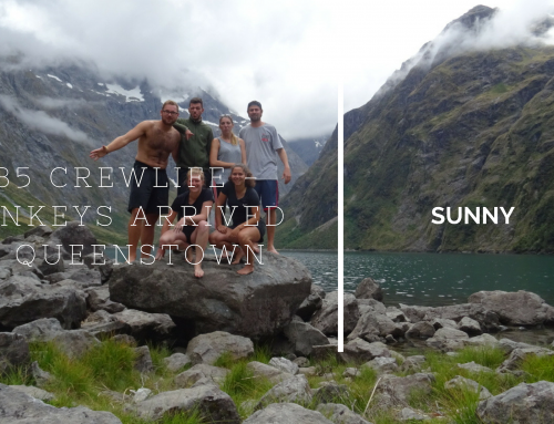 #35 CREWLIFE – MONKEYS ARRIVED IN QUEENSTOWN